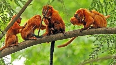 Hewan Amazon