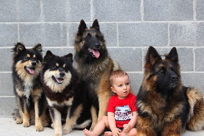 Anjing anak