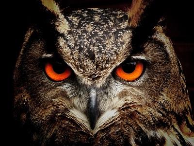 Mitos Mitos Tentang Burung Hantu Kembang Pete