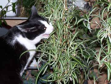 Anak Kucing Jadi Galak Mengatasi Kucing Yang Suka Makan