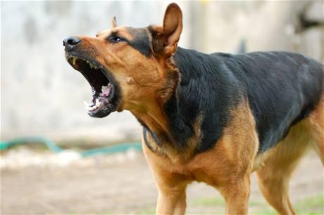 Anjing Menggonggong
