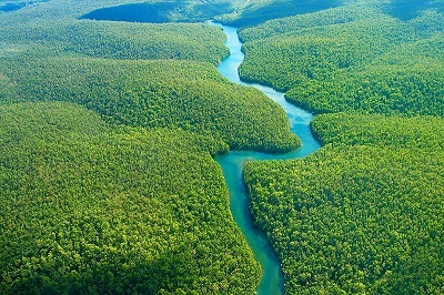 Foto Sungai Amazon