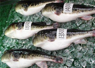 Gambar ikan kembung Jepang