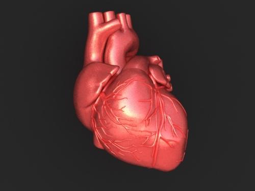 Gambar jantung manusia