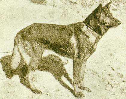 Hektor Linksrhein, herder pertama.
