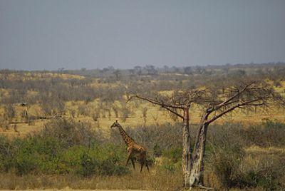 Foto Sabana Afrika