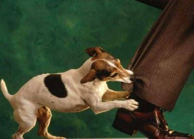 Foto anjing menggigit