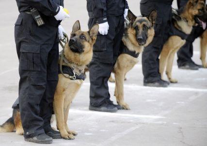 Foto anjing polisi