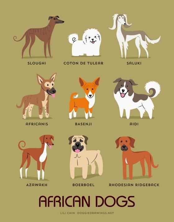 Gambar kartun anjing Afrika