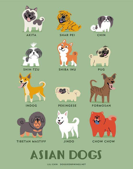 Gambar kartun anjing Asia