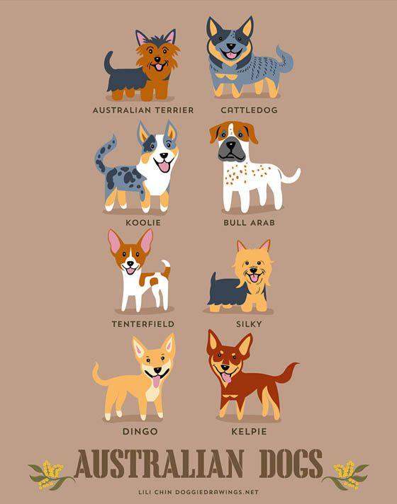 Gambar kartun anjing Australia