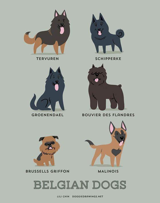 Gambar kartun anjing Belgia