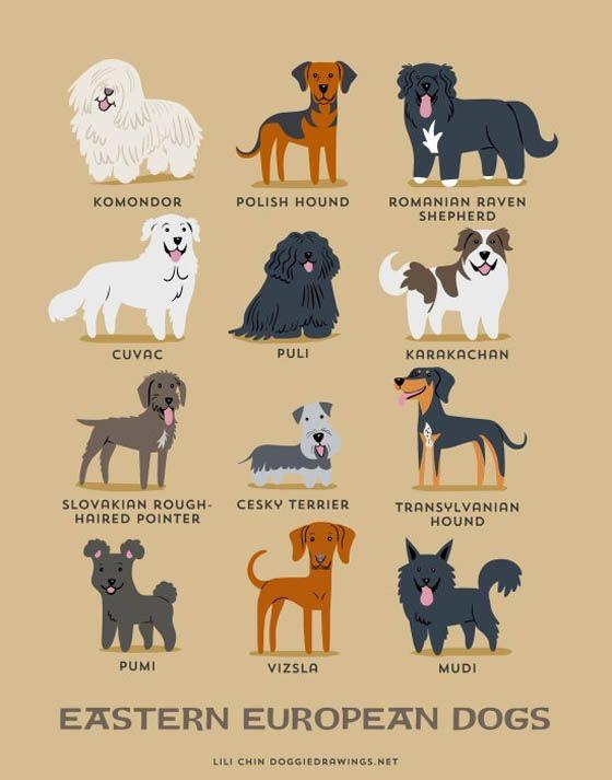 192 Gambar Ilustrasi Kartun Jenis-jenis Anjing di Dunia
