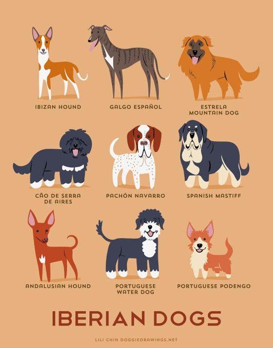 Gambar kartun anjing Iberia