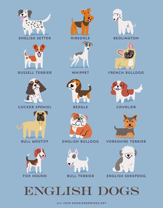 Gambar kartun anjing Inggris