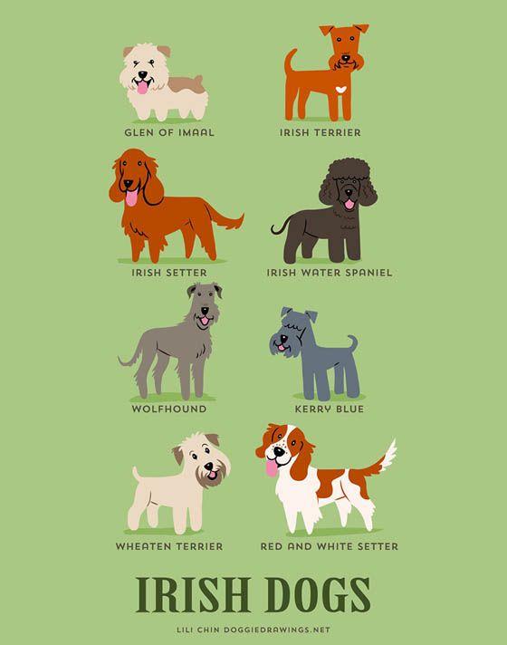 Gambar kartun anjing Irlandia