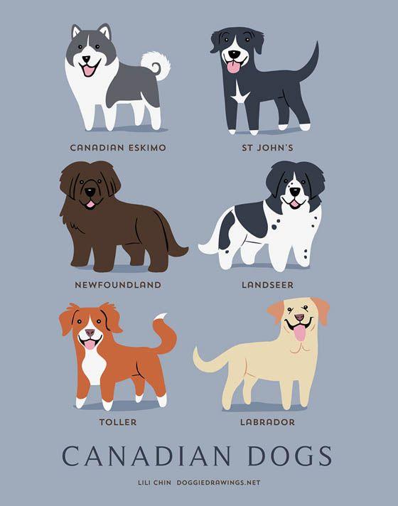 Gambar kartun anjing Kanada