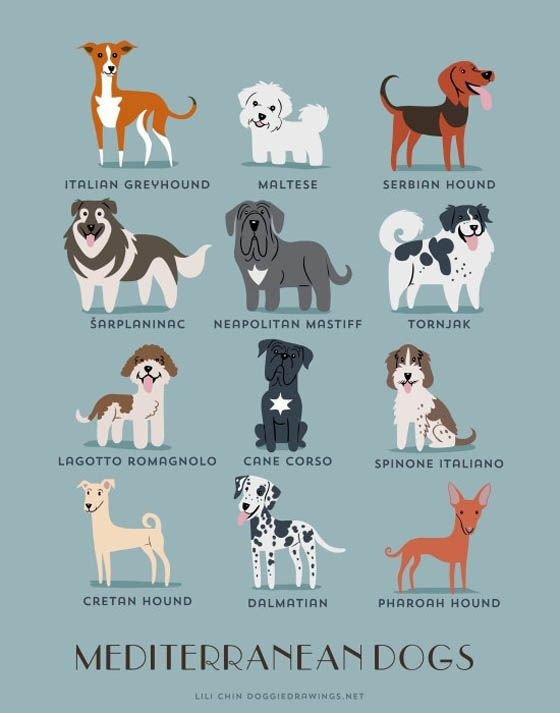 Gambar kartun anjing Mediterrania