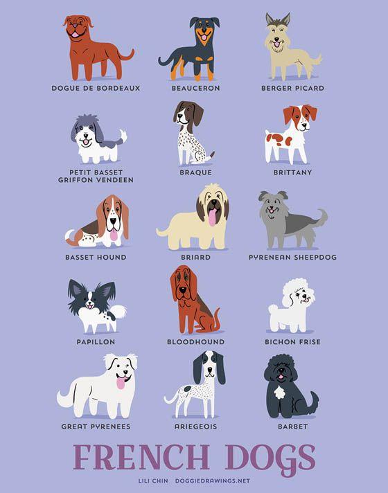 Gambar kartun anjing Perancis