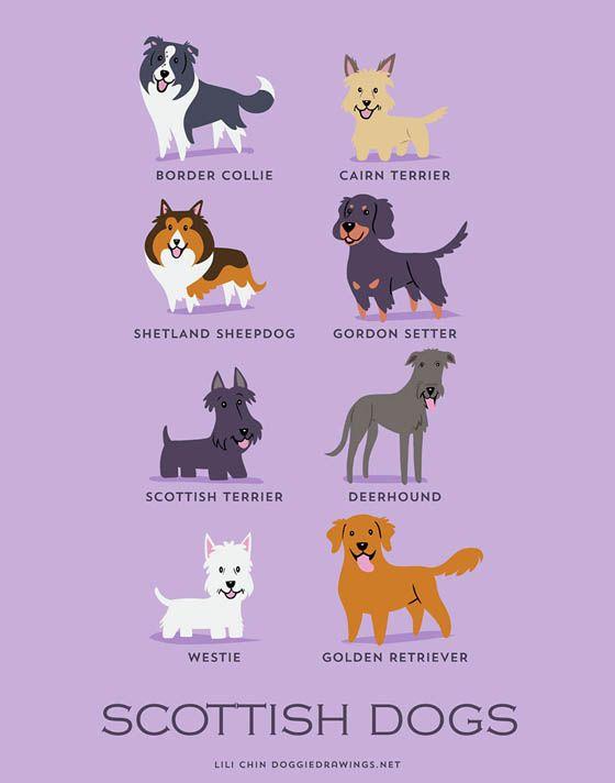 Gambar kartun anjing Skotlandia