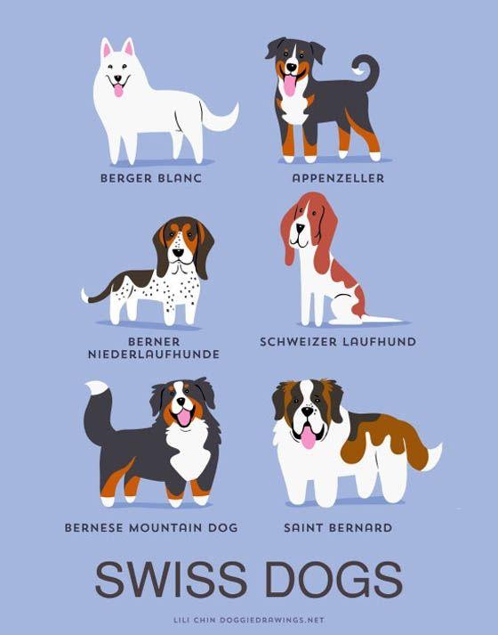 Gambar kartun anjing Swiss