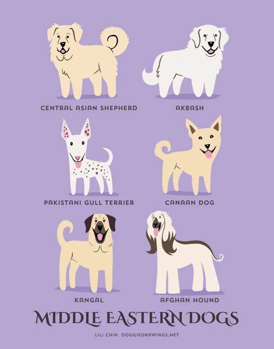 Gambar kartun anjing Timur Tengah