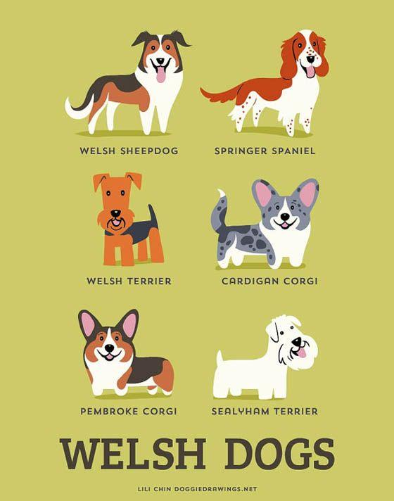 Gambar kartun anjing Wales