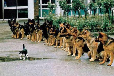 Tes kontol diri anjing