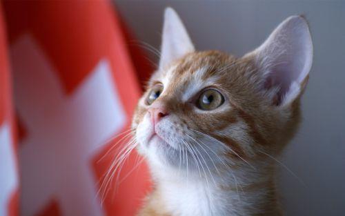 Kucing di Swiss