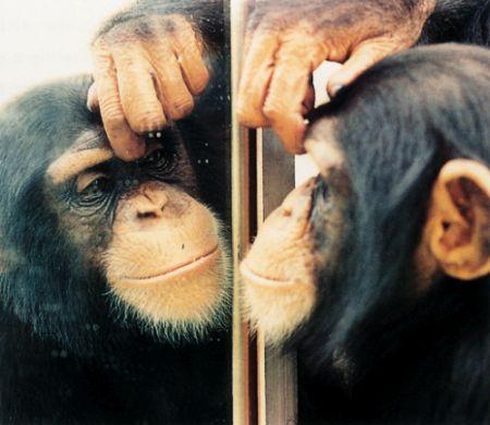 Monyet dan Cermin